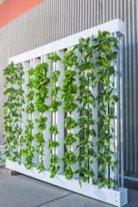 start your organic vertical farming