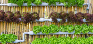 home organic vertical farming demo