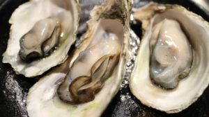 Edible Oyster Farming business